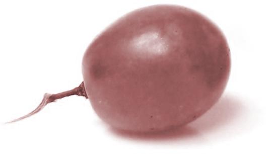 restaurant perez uva negra